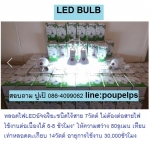 จำหน่าย ปลีกส่ง สินค้า หลอดไฟLEDอัจฉริยะชนิดไร้สาย 7วัตต์ ห้ความสว่าง 80ลูเมน เท
